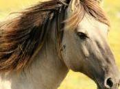 Com'è recinzione professionale cavalli?
