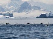nostra crociera Antartide