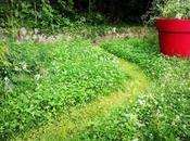 Come creare sentiero campestre tagliando prato