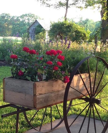 L'immagine può contenere: pianta, fiore, albero, spazio all'aperto e natura