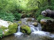 Come vivere aree naturali italiane ricche specie animali vegetali Europa.