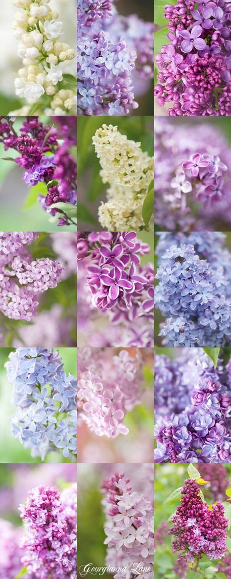 COLOR TREND: LILAC SHADES FOR SUMMER