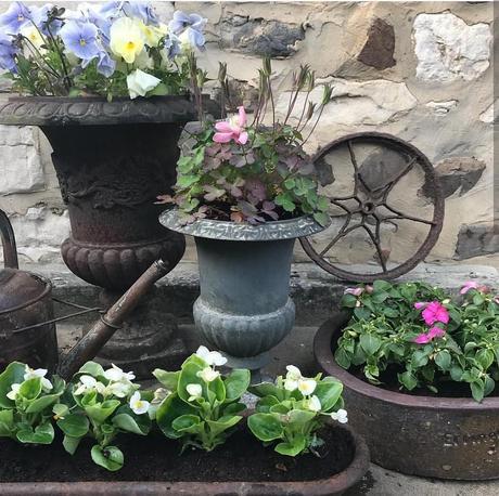 L'immagine può contenere: pianta e fiore