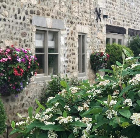 L'immagine può contenere: pianta, fiore, albero e spazio all'aperto