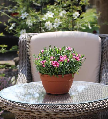 L'immagine può contenere: pianta e spazio all'aperto
