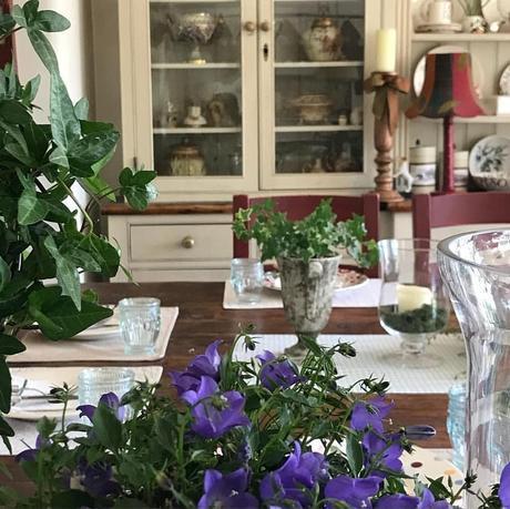 L'immagine può contenere: pianta, fiore, tabella e spazio al chiuso