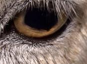 Dominion, documentario racconta sfruttamento animale come molti neppure immaginano
