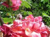 piante lungo sentiero bosco... Rosa