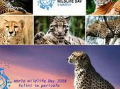 World Wildlife 2018 felini predatori pericolo