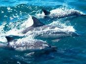 Navigando delfini