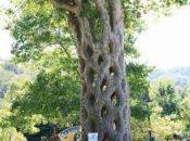 alberi strani incredibili mondo