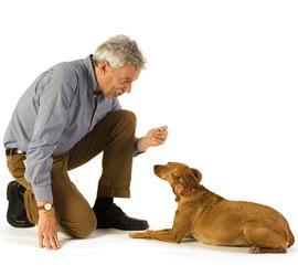"""Addestramento del cane: il comando """"terra"""""""