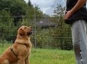 """Addestrare proprio cane: ecco regole farsi ubbidire, comando """"seduto"""""""