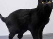 Miracoli animalosi oscar gatto bionico
