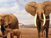 L'eleganza dell'elefante