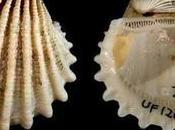 Molluschi Pigri!