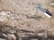 Creta, nuove scoperte nella necropoli Petras