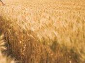 Fabbricati Rurali: Autecertificazione, Modello Presentazione Domanda