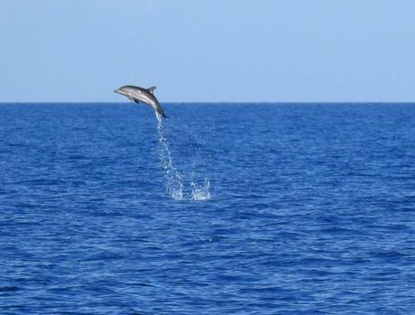 Foto. Nuovo avvistamento nel Golfo: il salto del delfino diventa virale