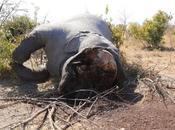 Botswana: bracconaggio volevo vedere