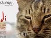 Kedi città gatti Caayda Torun