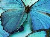 farfalle italiane!