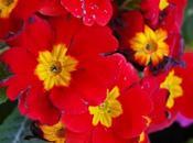 fiore bastone