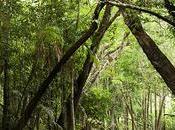 Evangelizzazione:c'è grande difficoltà reperire operatori pastorali nell'Amazzonia brasiliana