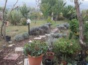 Autunno giardino Verde quiete