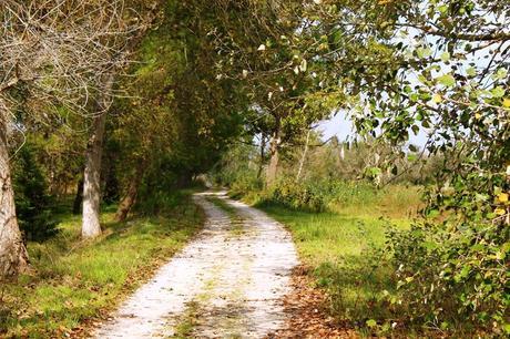 L'immagine può contenere: albero, pianta, spazio all'aperto e natura