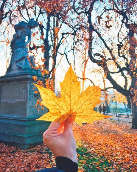 Ho imparato ad amare la bellezza dell'autunno