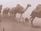Arabia Saudita: Impressionante, grande deserto diventato mare