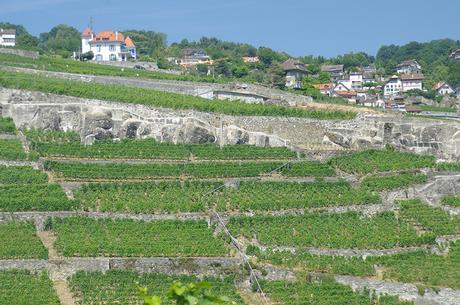I terrazzamenti del Lavaux con i vignet