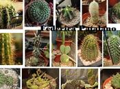 Identificazione cactus: come