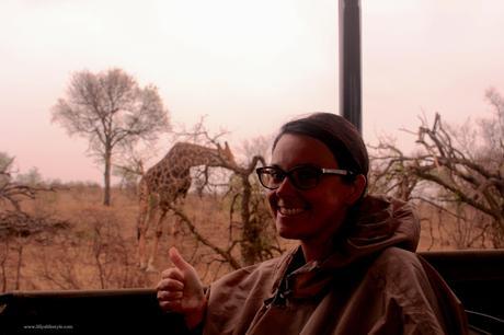 safari parco kruger gli animali