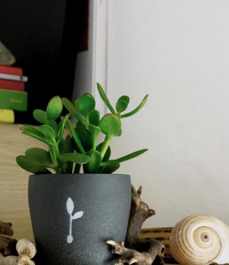 regala-una-pianta