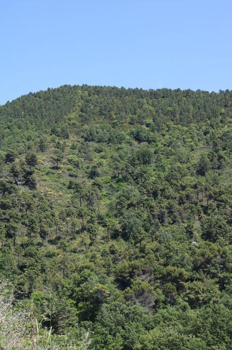 Seborga (IM): vallone del torrente Sasso