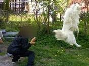 Impicca cane mette foto facebook