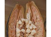 magico baobab: fonte probiotico, immunostimolante, regolatore intestino, glicemia colesterolo
