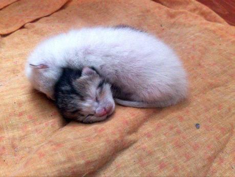 Visto che bei gattini paperblog for Konzentrationsschw che bei schulkindern