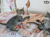 Guardando foto gattini più: recente studio