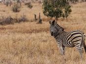 Safari Sudafrica: guida completa Parco Kruger