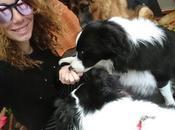 Gidass assicurazione cani