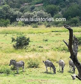 Sudafrica: Pilanesberg Park e Johannesburg
