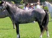 cavallo: storia, evoluzione selezione fino secolo Parte