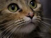 baffi degli animali: cosa servono vibrisse?