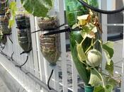 piante vivono senza terra