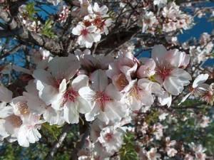 Fiori di bach per il lutto paperblog for I fiori della balsamina