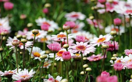 Cura e benessere del proprio giardino: cosa c'è dietro un giardino curato