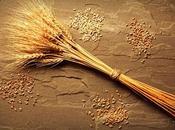 Grani antichi: perché fanno bene! articolo della nutrizionista Annarosa Pretaroli)…